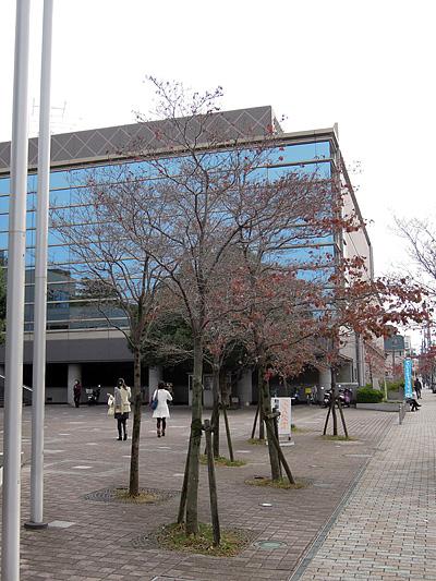Sayaka_hall