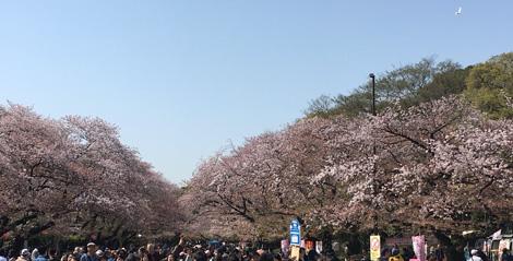 Ueno_180331