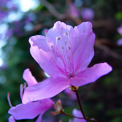 Miho_flower_2