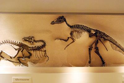 Naturalhistory11