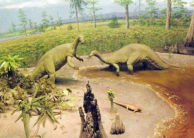 Naturalhistory12