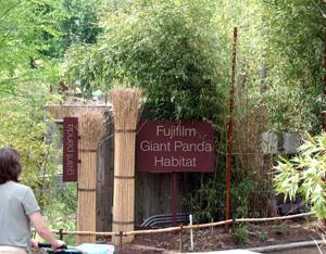 Panda_habitat